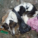 Dundee woman who dumped starving dog in bin banned from keeping animals