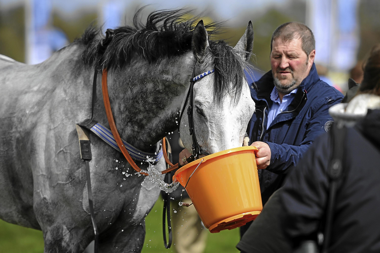 Pharawaydante enjoys a drink at Balcormo Races.