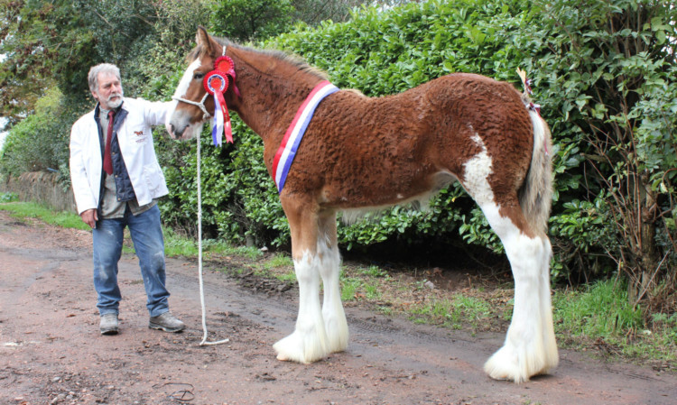 Sandy Aitken's Newton Glens Kara took the supreme and foal championships at North East Fife