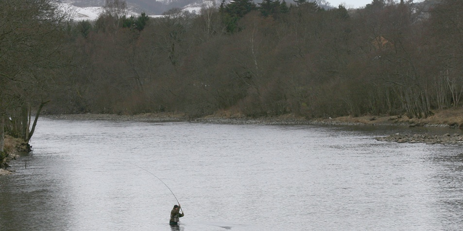 Picture near Pitlochry shows a salmon fisherman braving the icy waters of the Tummel.