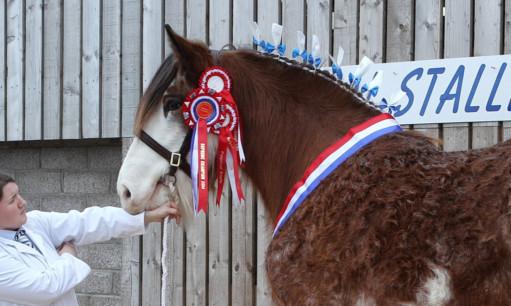 Cawdor Cup winning stallion Doura Master Eddie