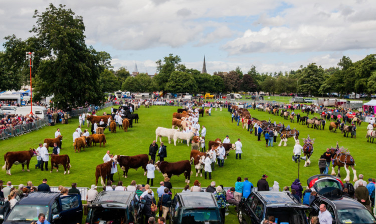 The grand parade of livestock at last years Perth Show on the South Inch, which is to be the events new permanent home.