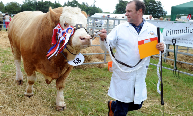 The champion of champions was a Simmental, Grangewood William, from Gerald and Morag Smith, Drumsleed, Fordoun.