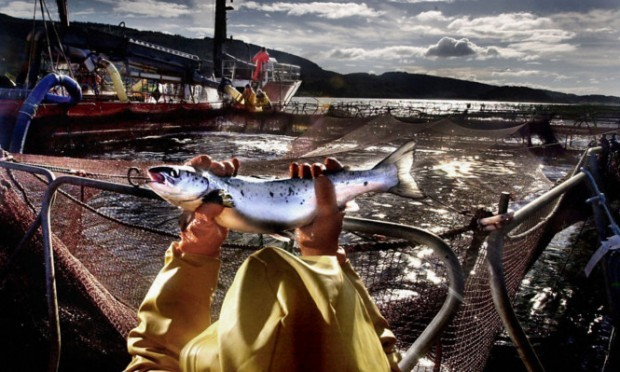 A worker at a salmon farm on Loch Linnhe near Fort William.