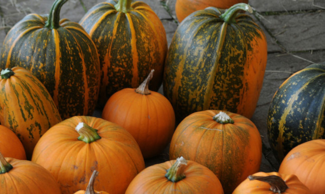 A spooky sight...but are green pumpkins the norm this Halloween?