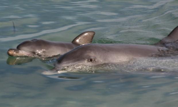 Newborn dolphins