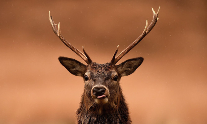 Landowners may be compelled to cull deer.