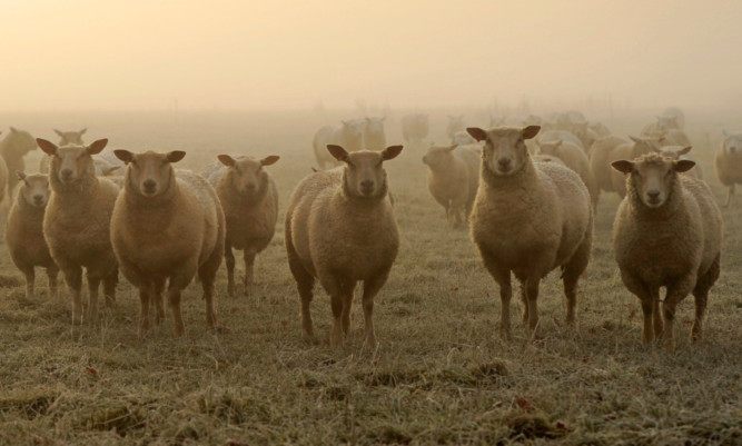 There has been a firm start to the year for the sheep market, said QMS.
