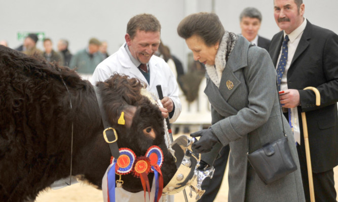The Princess Royal presented the cup to overall Beef Shorthorn champion bull Lowther Gervase and stockman Mike Clark at Stirling Bull Sales.