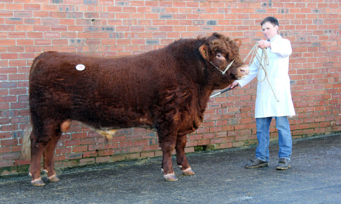 The 11,500gns top-price bull was Dirnanean Riley from Finlay McGowan.
