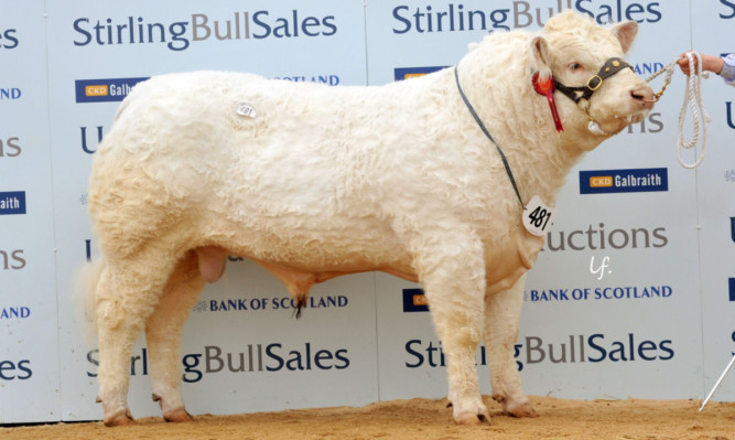 Clyth Indestructable sold for the day's top price, 18,000gns.