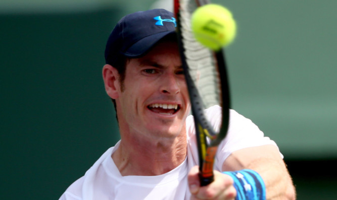 Andy Murray in action against Donald Young.