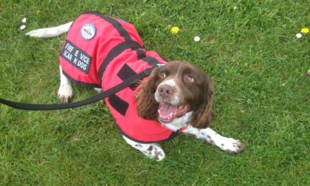 Rescue dog Diesel waws part of the effort in the aftermath of the Nepal earthquake.