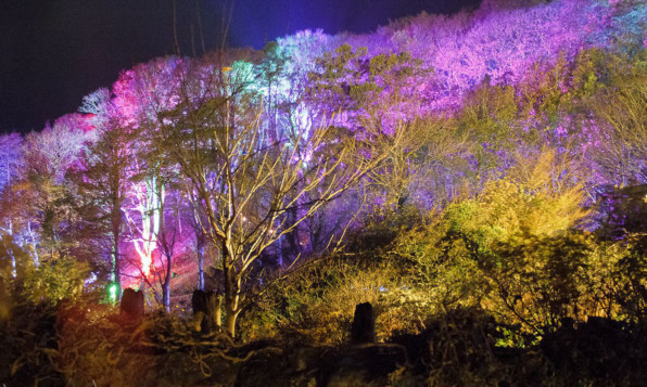 The creators of the event specialise in designing spectacular settings of illuminated forest.