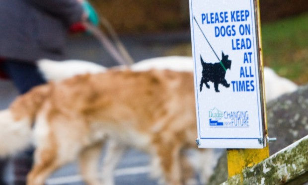 The council says the plans would be designed to clamp down on dog fouling and attacks.