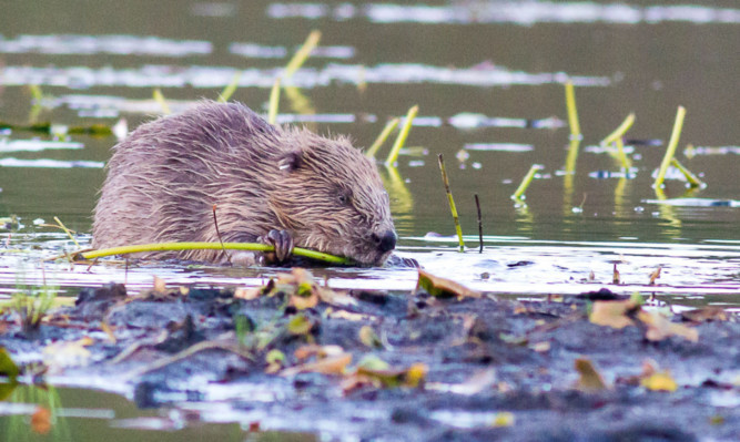 Jenny Hjul says Richard Lochhead has done little to reassure farmers on various issues, such as the threat of beavers.
