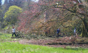 Judy Murray's image of workers clearing trees away at Cromlix House Hotel.
