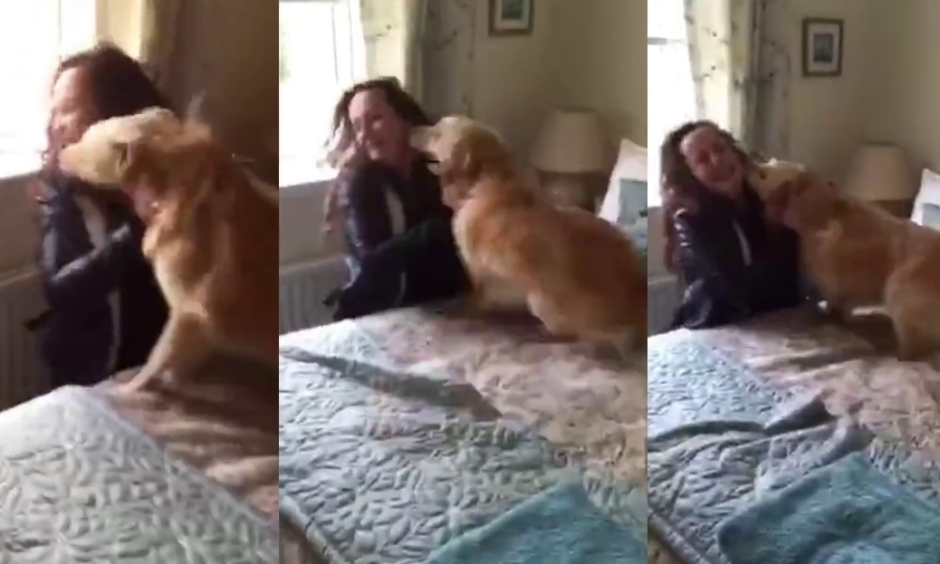Snaps from the video showing Sandy going wild with delight when he finds Maria.