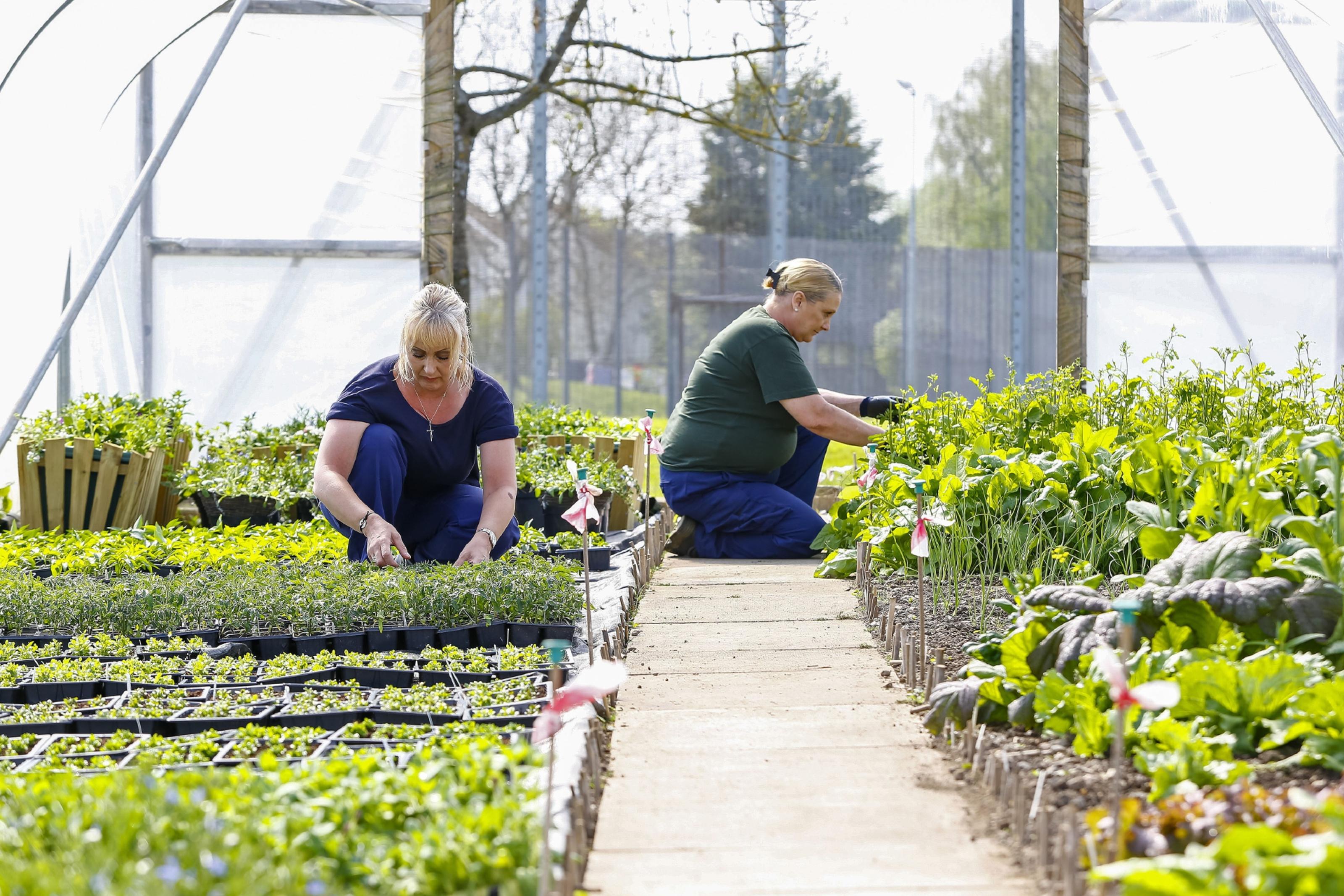 Gardening Scotland To Feature Prison Show Garden The Courier