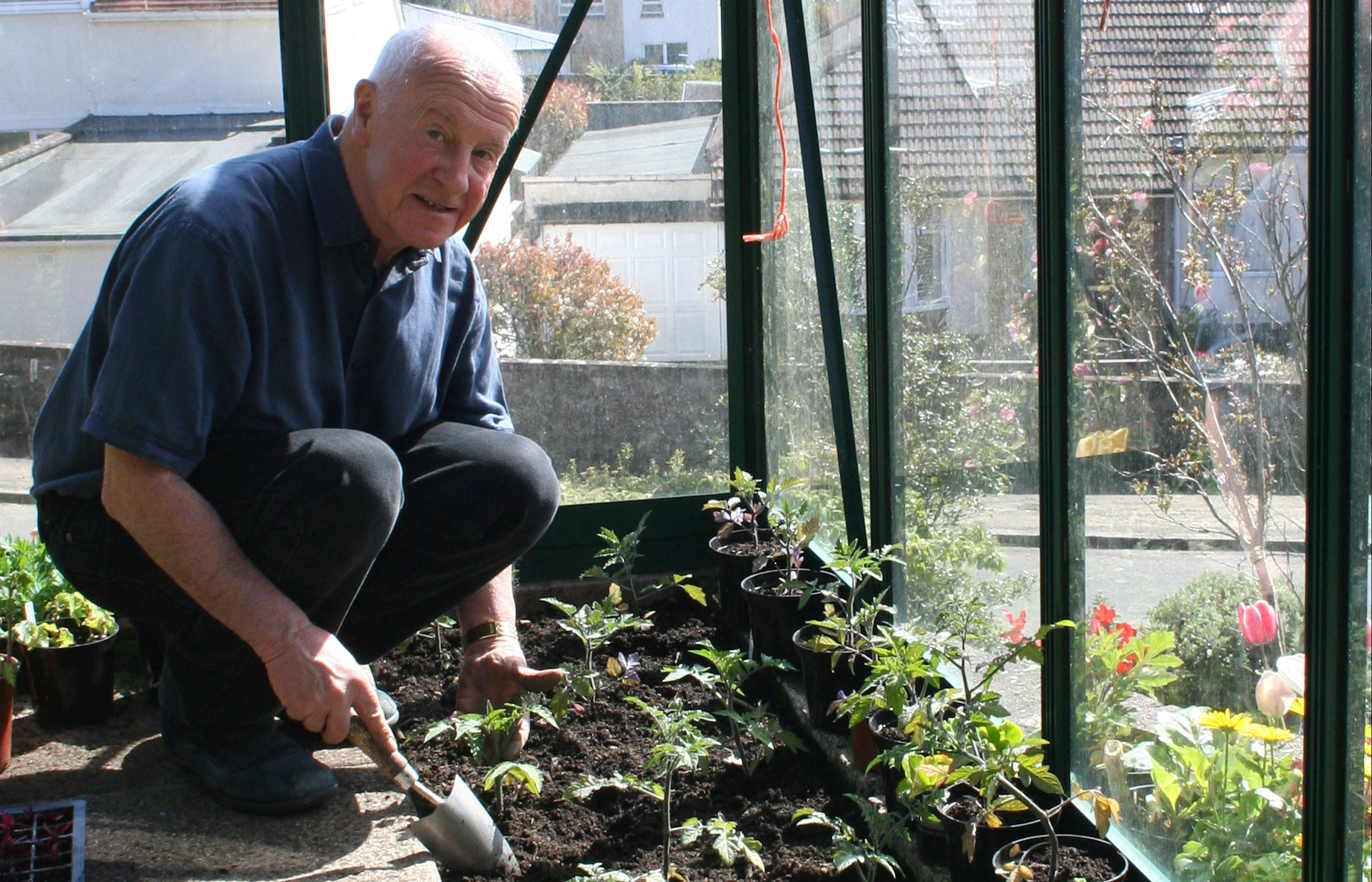 John planting tomatoes in the greenhouse.