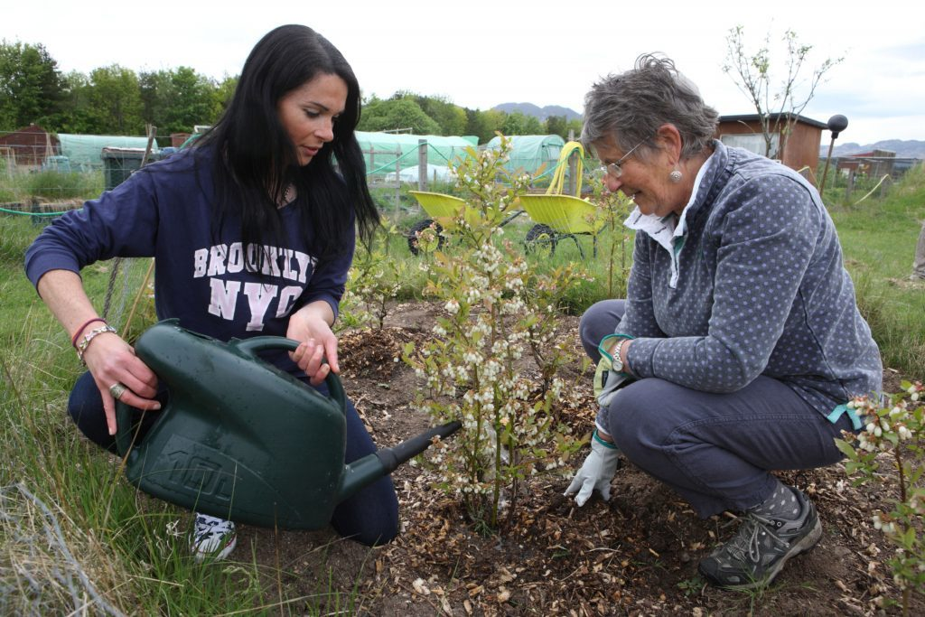Gayle Ritchie watering blueberries with Di McNab.