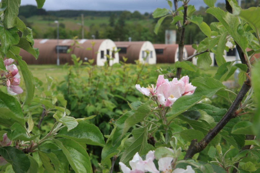 The Community Orchard is in the middle of Cultybraggan Prisoner of War Camp.