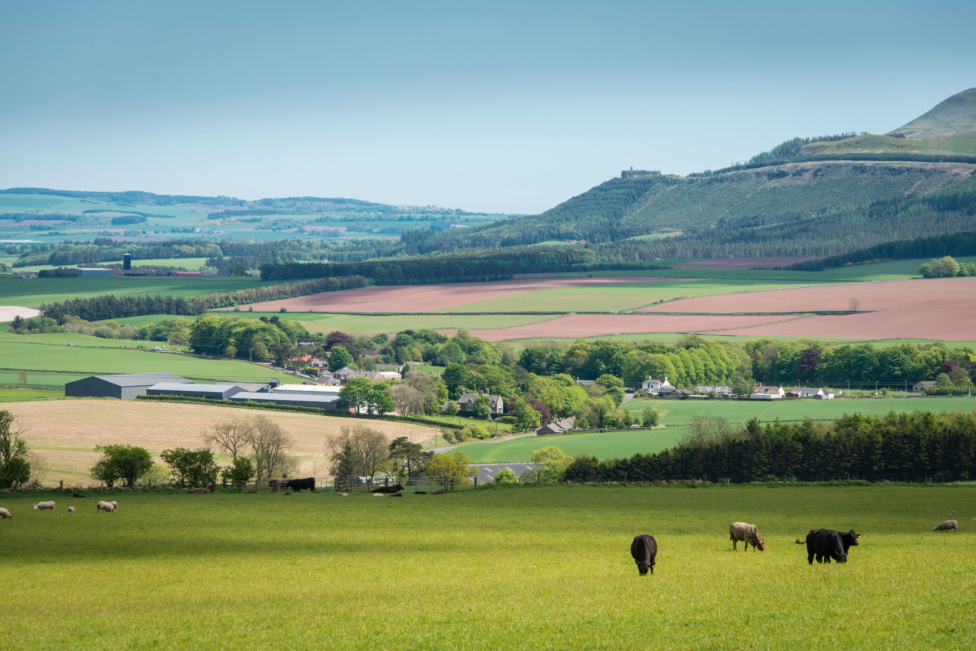 Post-Brexit funding presents 'a challenge but also opportunity' for farming