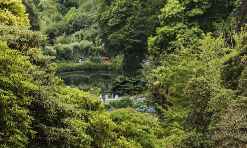 Trebah Gardens.