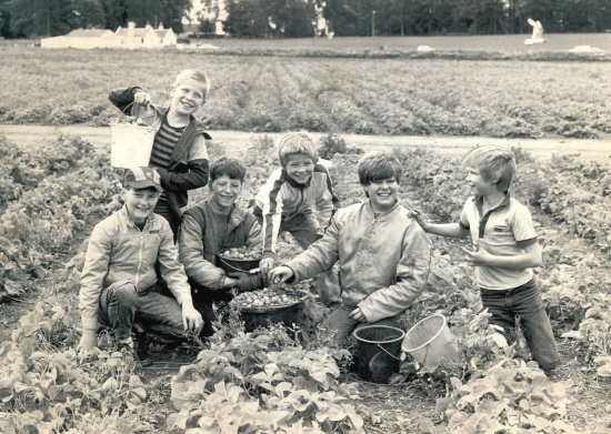 A happy group picking strawberries at Starr In Farm, Longforgan, in July 1985.