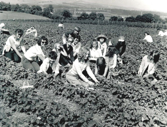Pickers filling their punnets at Mansfield of Essendy, Blairgowrie in July 1972.