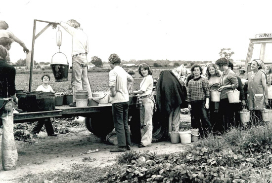 At the weigh-in at Middlebank Farm near Errol in July 1977.