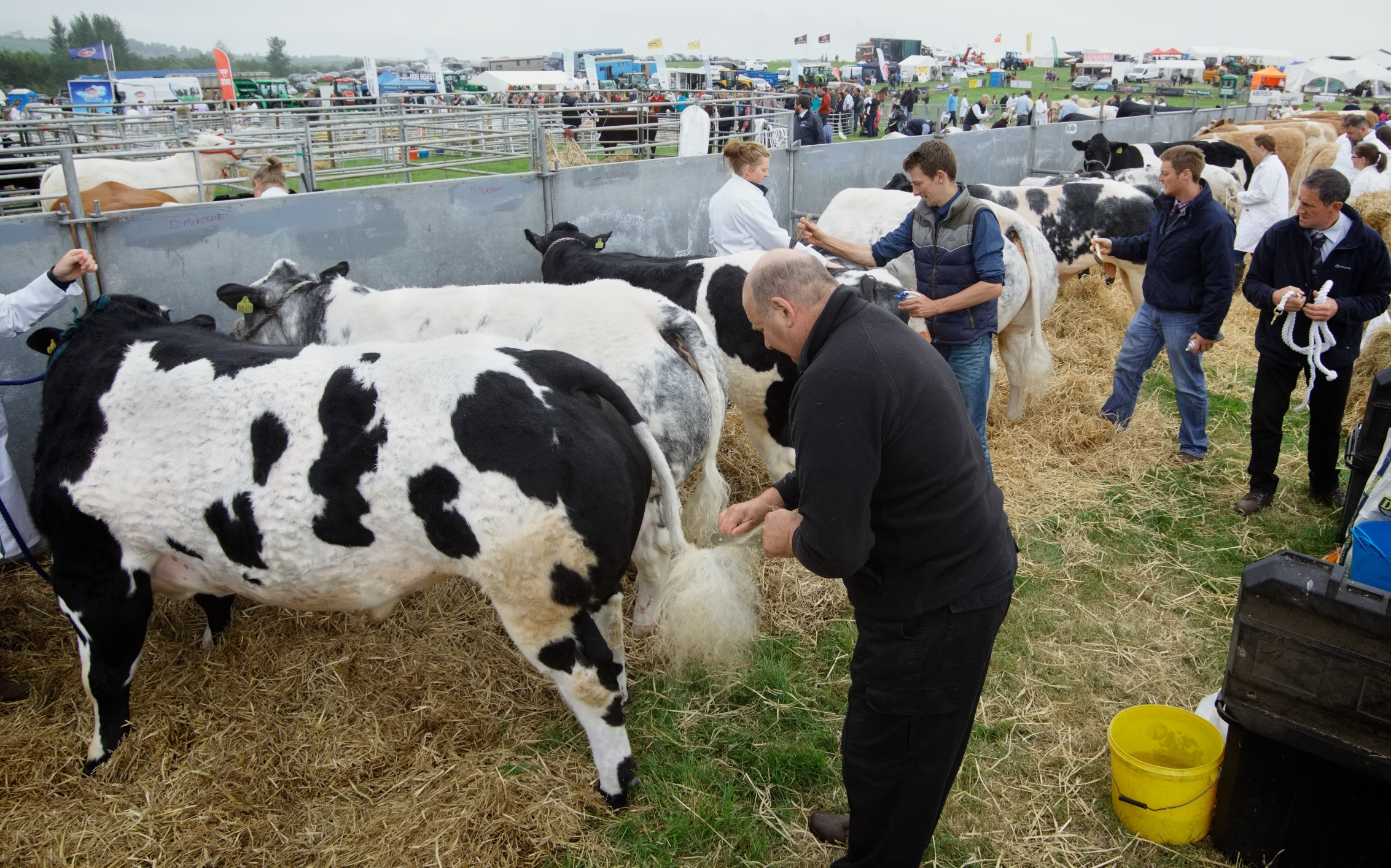 Breeders went to great lengths to impress the judges