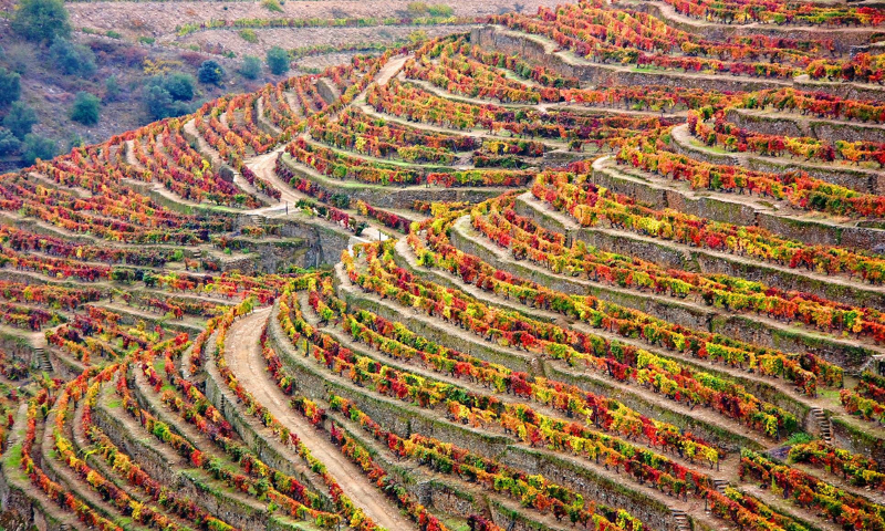 winery-douro-portugal