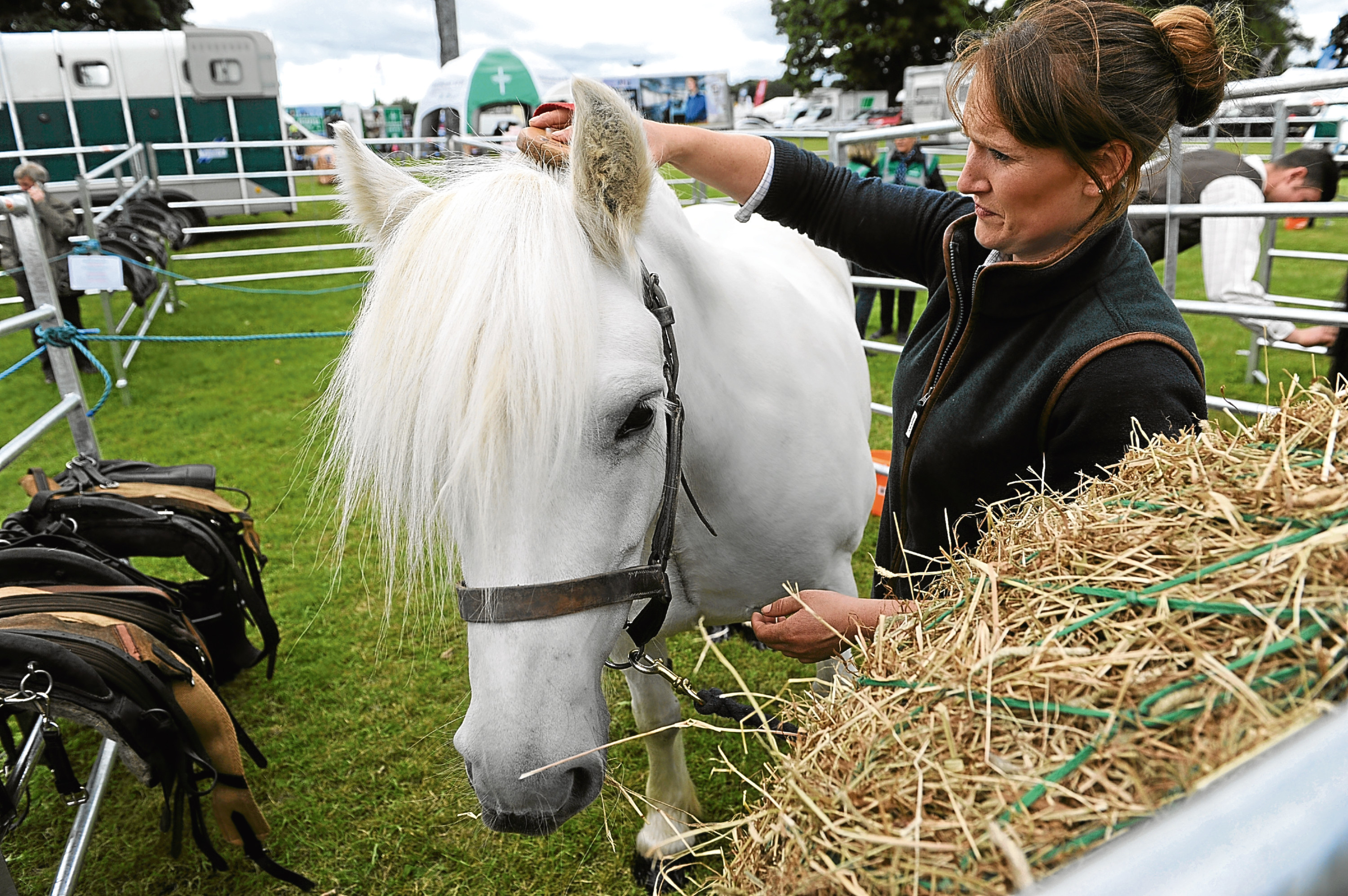 Debbie McLauchlan from Blair Castle Estates with highland pony Atholl Lady Jennifer, who used to bring deer off the hills, pictured at last year's fair. Picture: Kim Cessford.