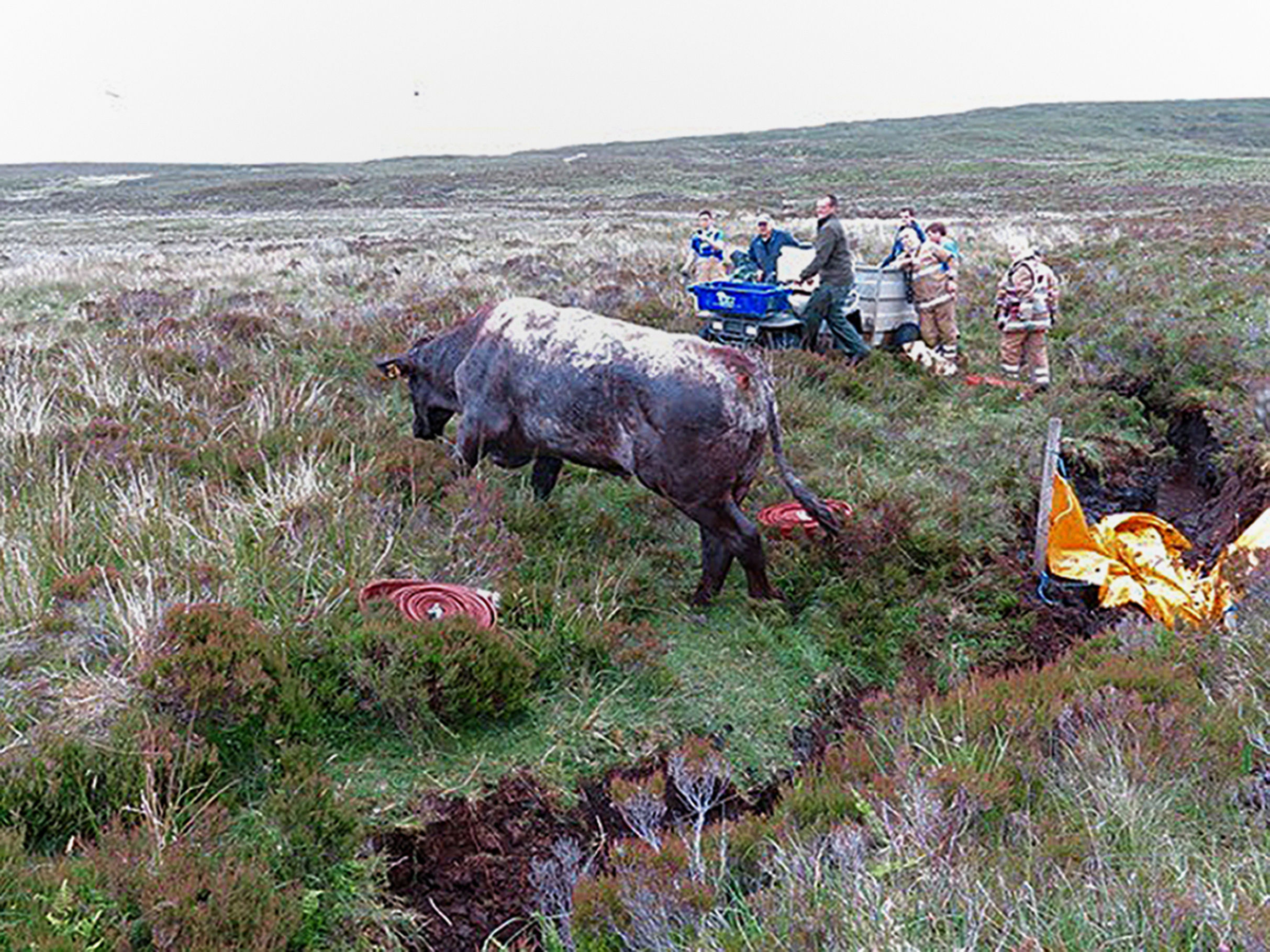 A 15-strong firefighter crew battled to rescue a bull which had been trapped in a ditch for two days on peatland on the Isle of Skye.