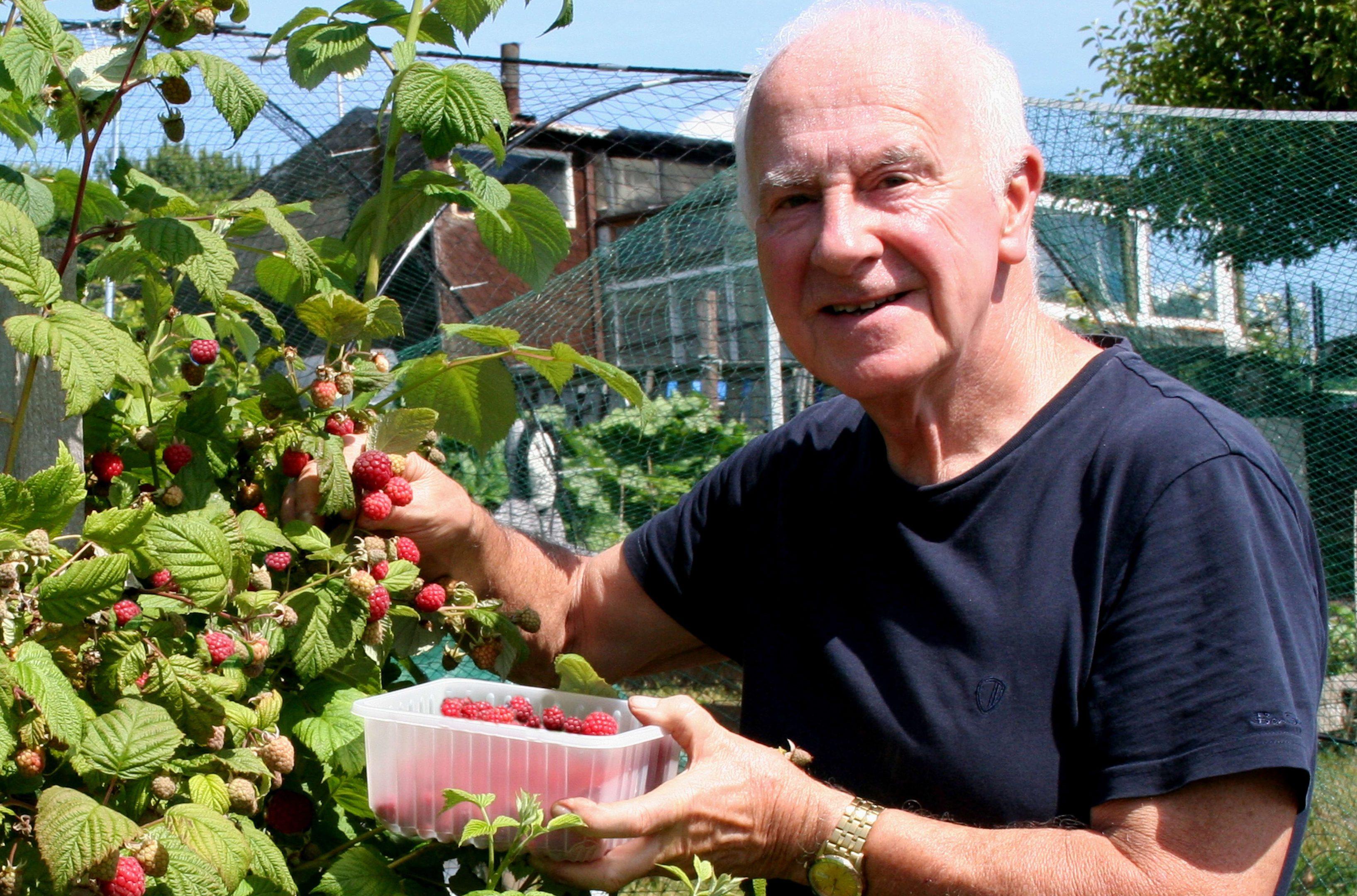 Picking a few Glen Fyne raspberries
