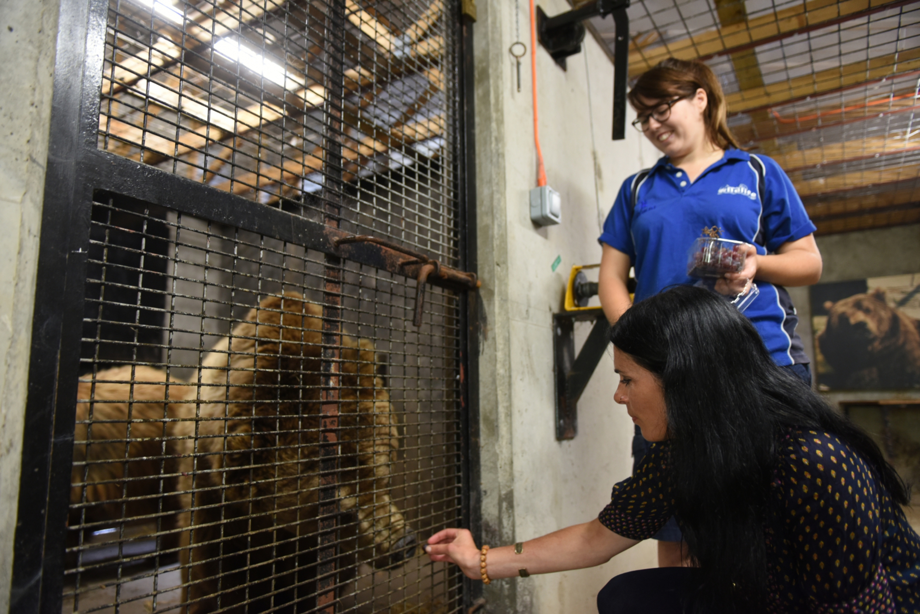 Gayle feeds grapes to Comet as keeper Lori McFadyen watches.