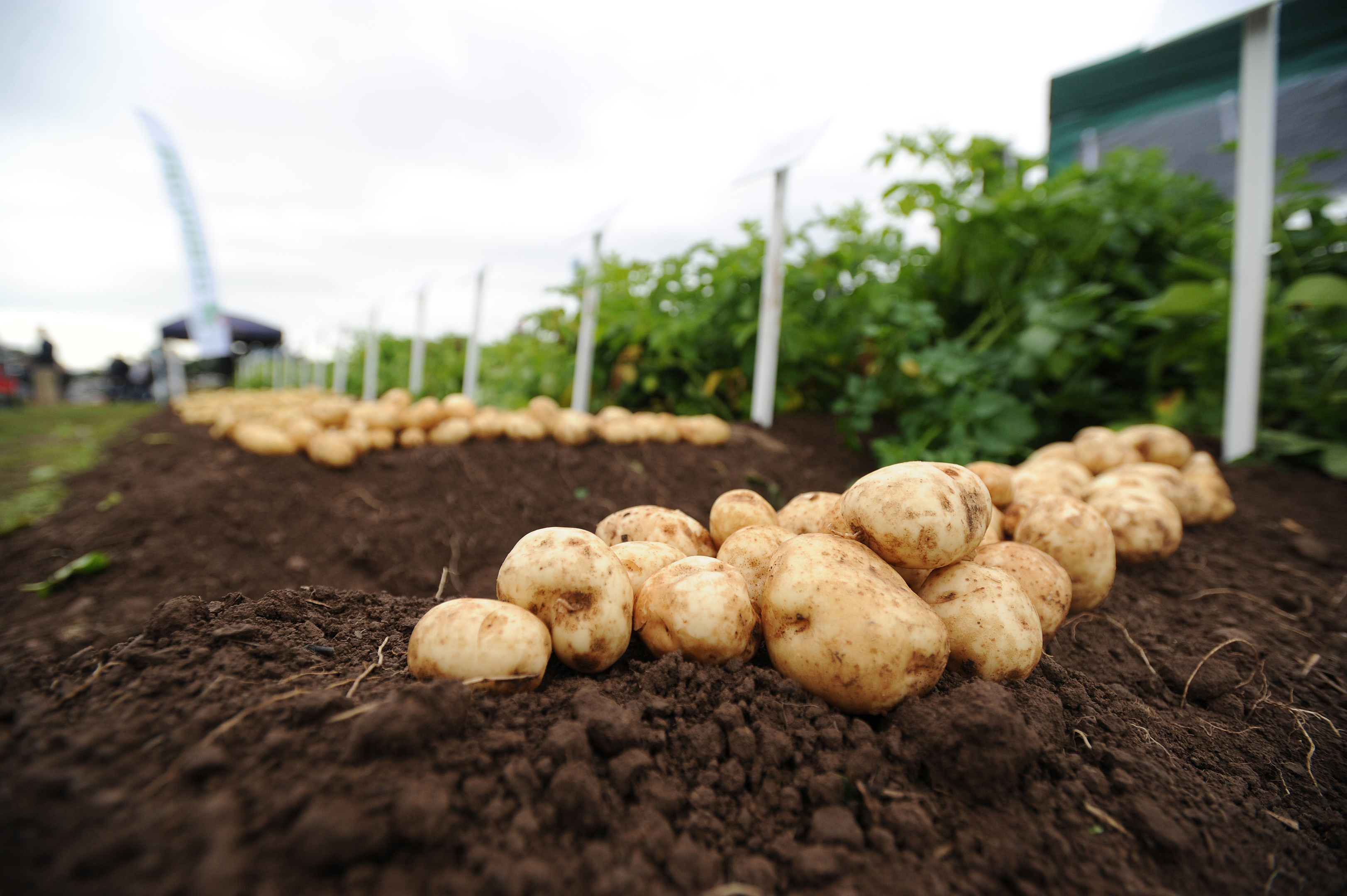 The Farmcare potato business at Carnoustie has been bought by Morrisons.