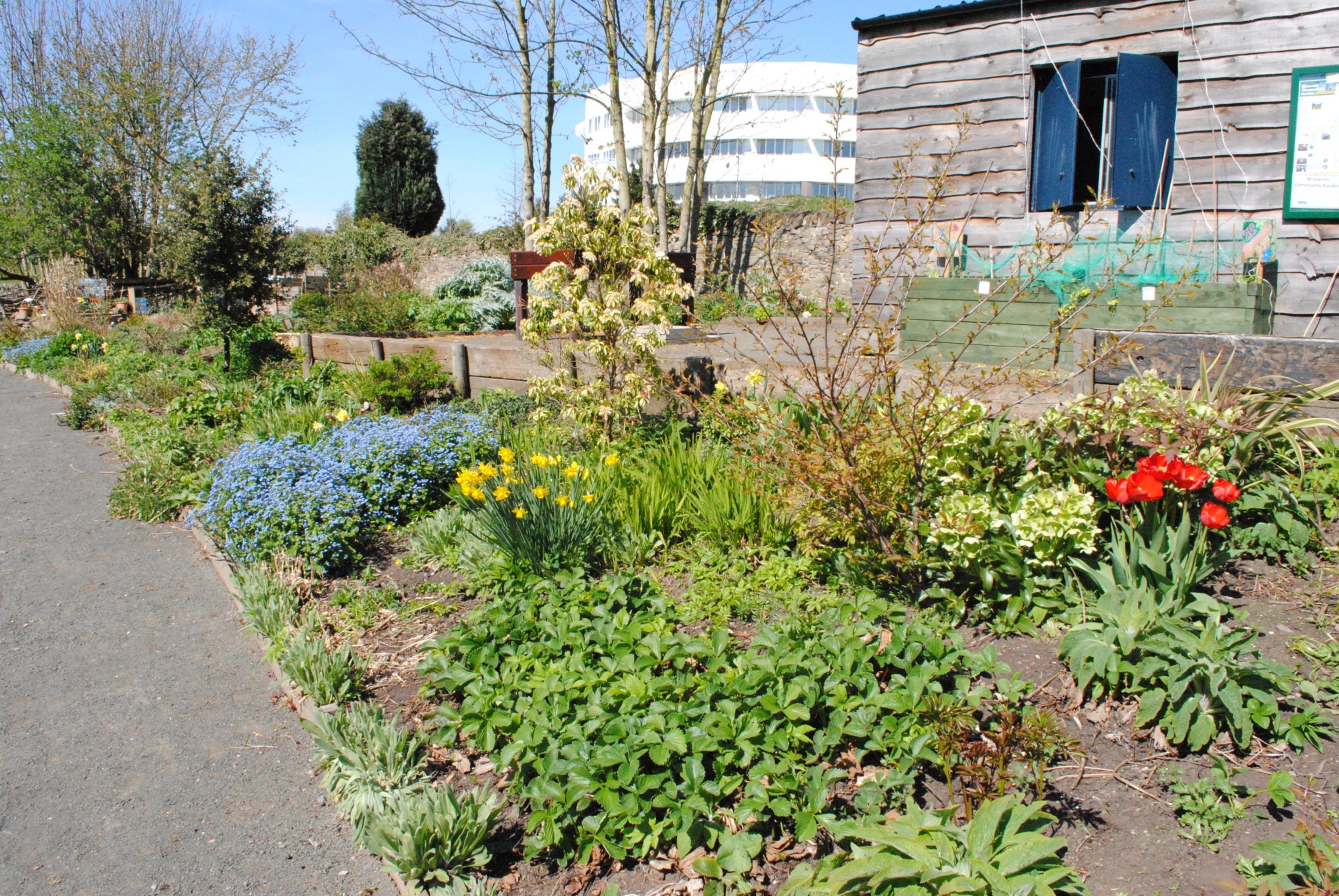 The Ninewells Community Garden