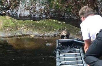 Rescuing the ferret was a tricky operation.