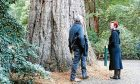 Angus's son James and his wife Harriet admiring the giant redwood at Dawyck Botanic Garden in the Borders.