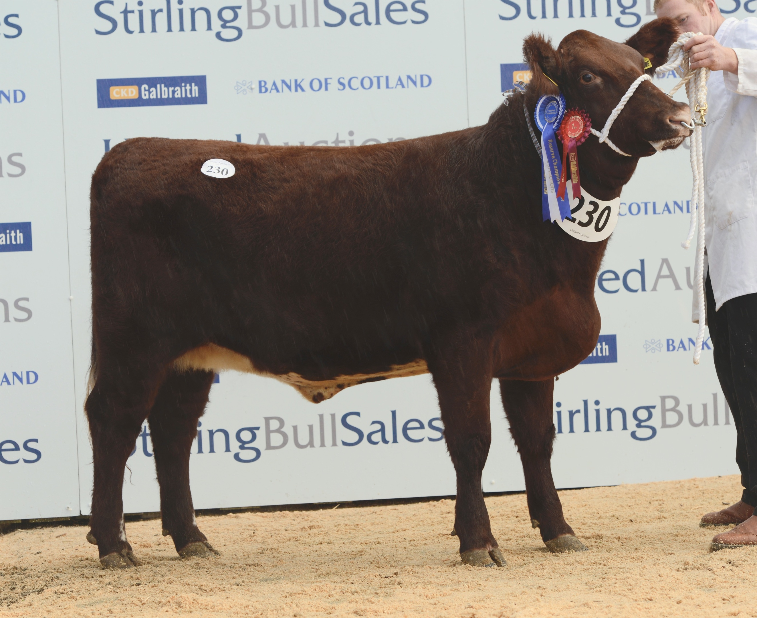Eastmill Lovely June was bred by Doldy Farms