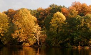 Forestry sector handed £6.5m boost