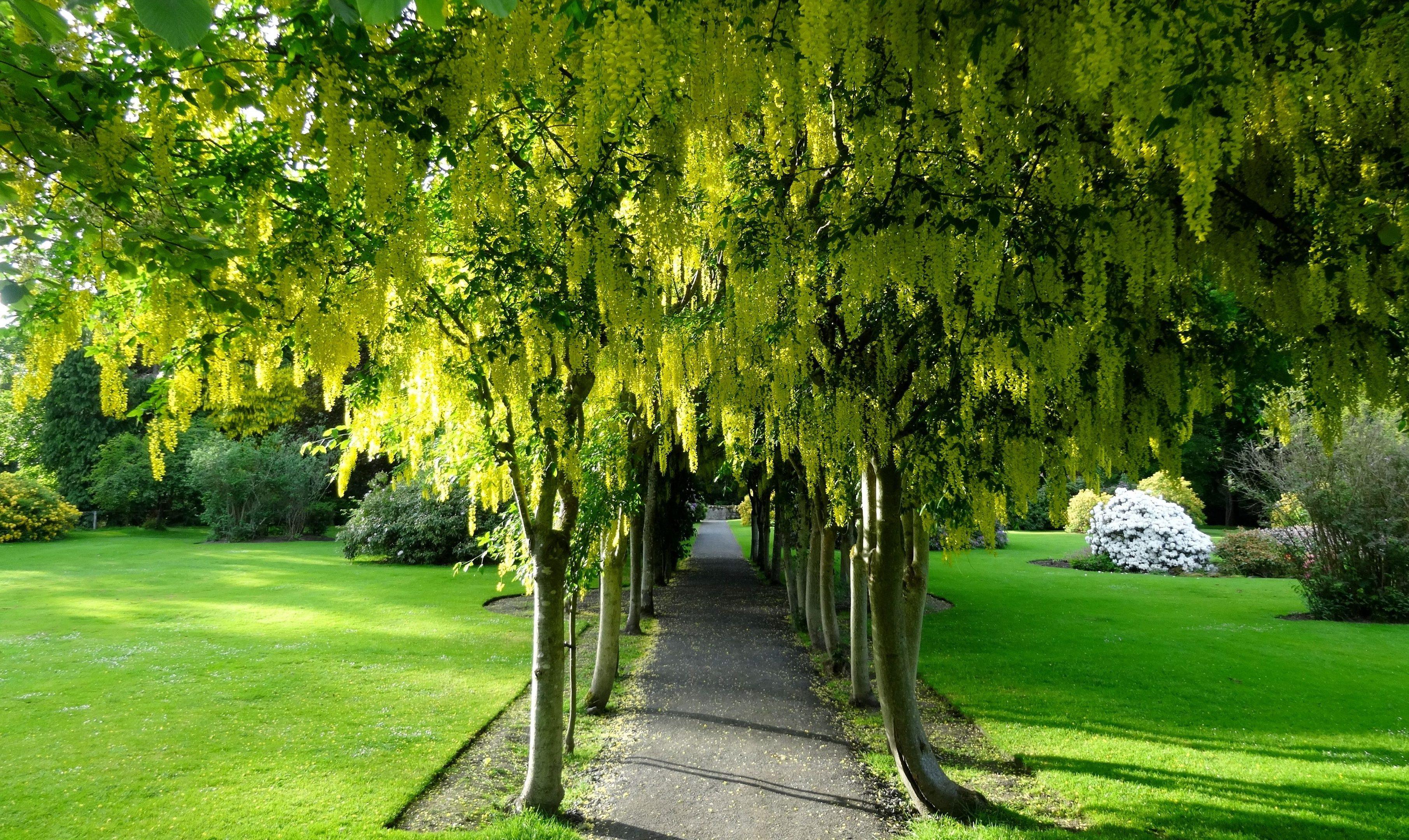 Gardens at Scone Palace.