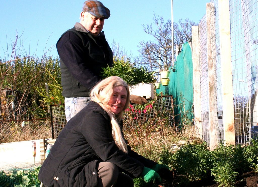 Planting wallflowers