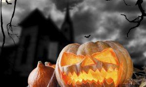 Fang-tastic Halloween breaks.