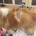 Family dog left with serious injuries after attack during walk in Dundee