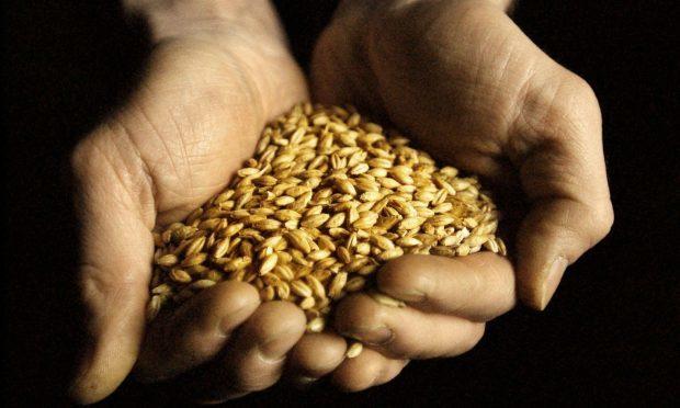 A handful of barley.