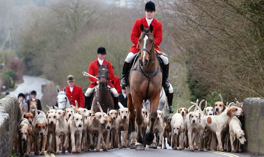 should fox hunting be banned essay Should foxhunting be banned in britain uploaded by hazel_b1 on feb 21, 2001 i would like to start this essay by stating that i am against the motion, and that i see.