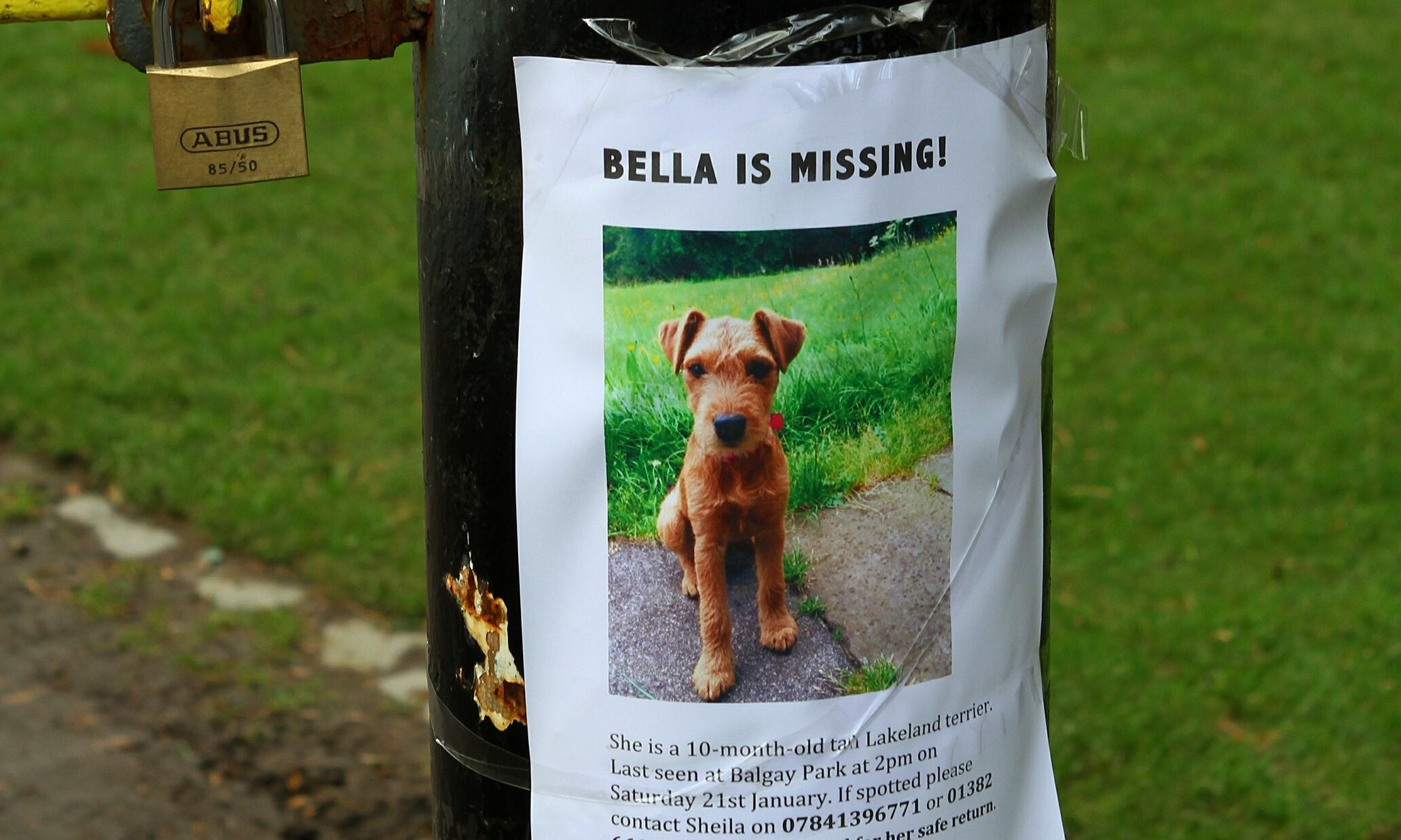 Credible sightings of Bella have been reported in the last 48 hours.
